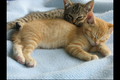 Cat Pictures for Blog 004